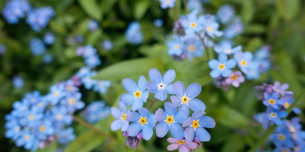 El pati de Ca Les Monges consta d'un jardí botànic amb una àmplia varietat de plantes. / Gemma Evans